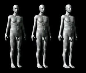 Penis vs body size