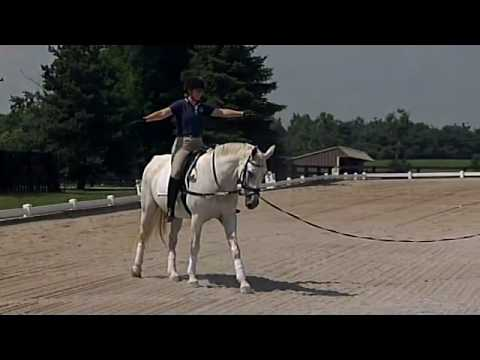 Adult lunging rider book the