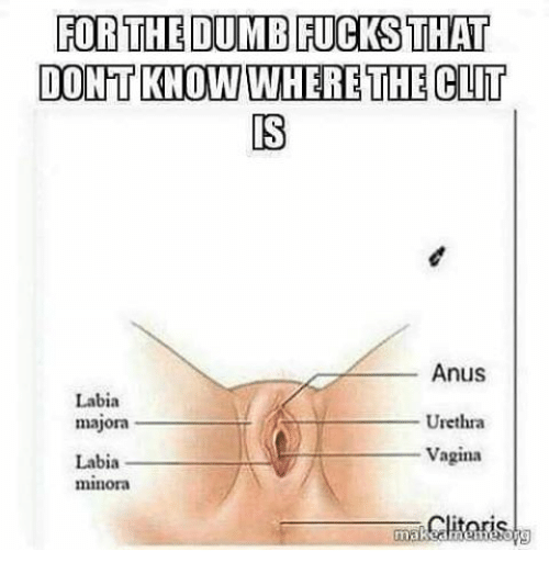 Clitoris where is it