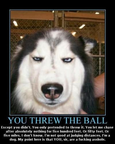 Pissed off funny pictures
